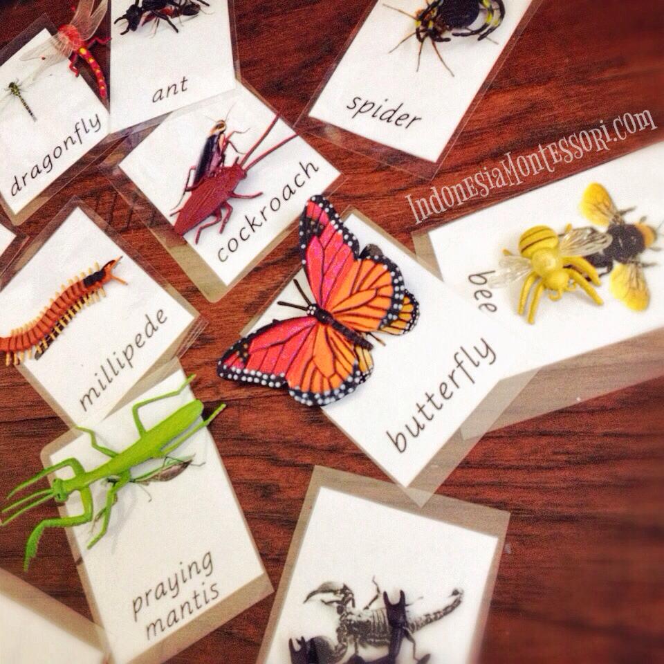 pengenalan belalang serangga arthropoda