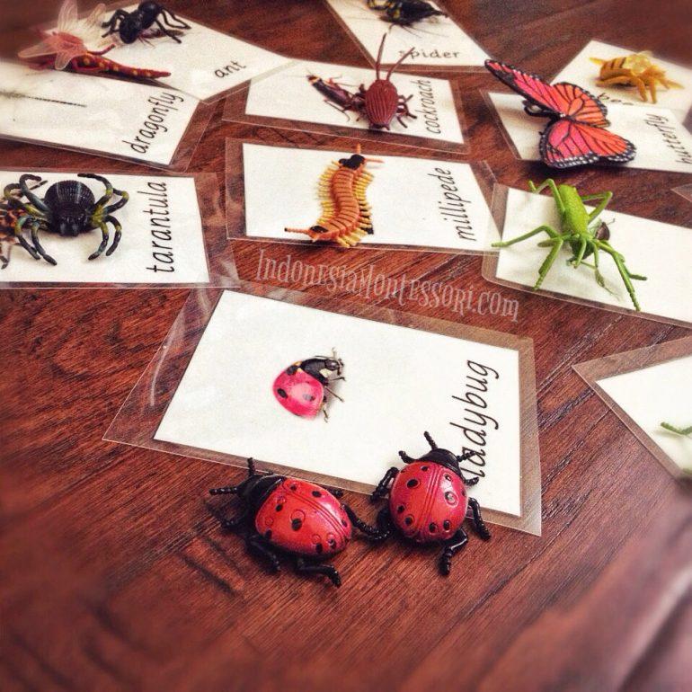 sains pengenalan serangga dan belalang