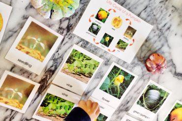 montessori di rumah siklus hidup buah