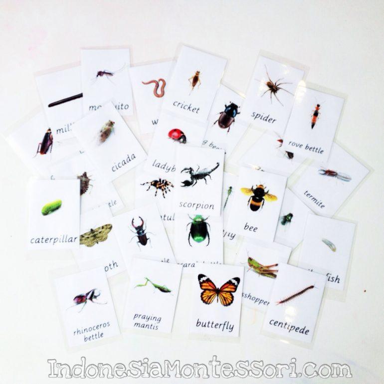 printable serangga kartu belajar gratis